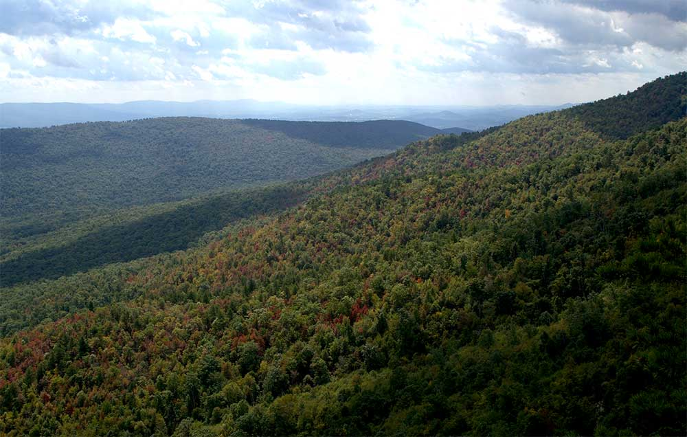 Picture of jefferson national forest