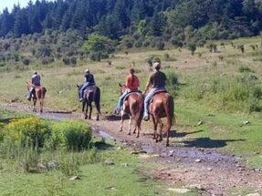 Appalachian Horseback Riding Adventures